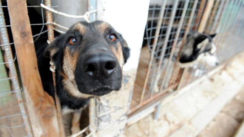 sobaka voler В Октябрьском районе началась акция помощи бездомным животным
