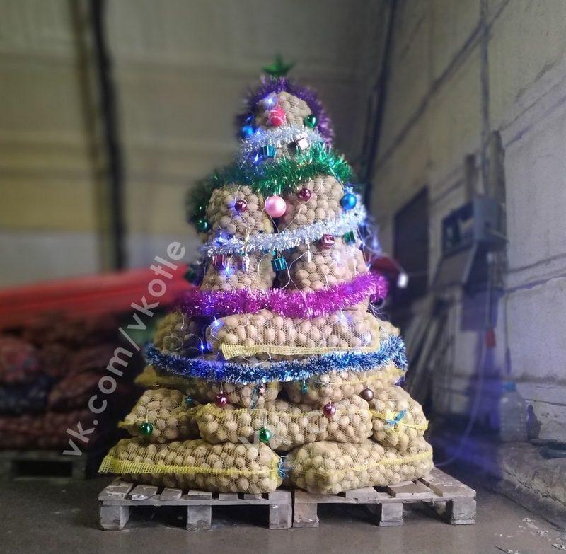 В Котельниче установили 800-килограммовую елку из картошки