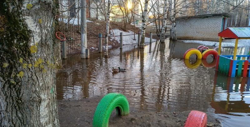 В Кирове на затопленную площадку детсада прилетели утки (+ФОТО)
