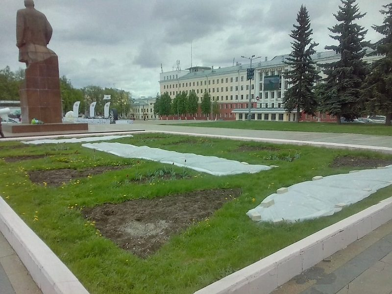 Кировские цветники укрыли спанбондом