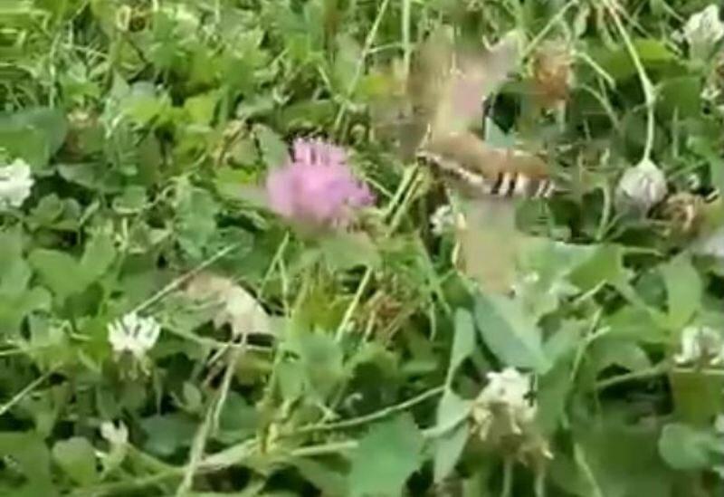 В Кирове замечено причудливое насекомое (+ФОТО)