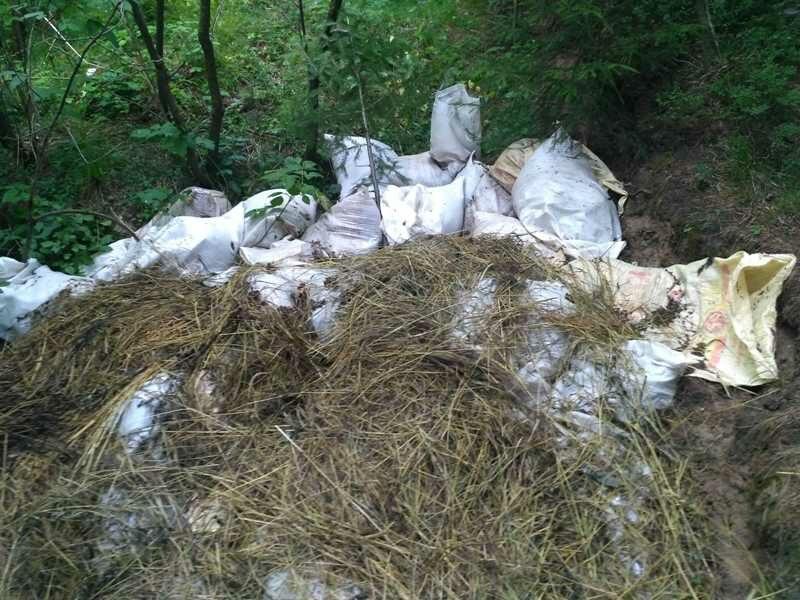 В Ганино лес источает зловоние