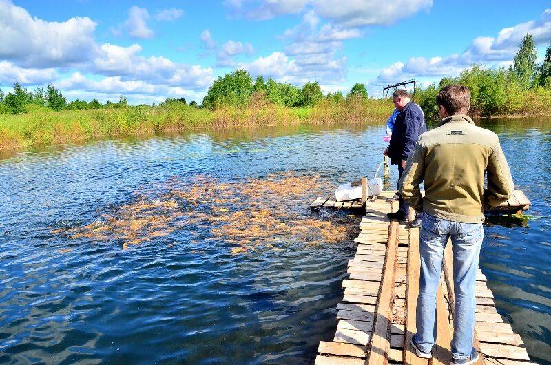 «УРАЛХИМ» выпустил в реку Вятка тысячи мальков стерляди