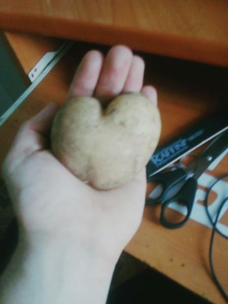 Кировчане удивлены необычной формой картошки