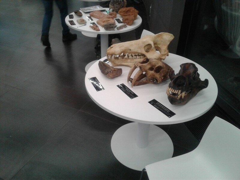 Кировчане пригласили Валентину Матвиенко и Сергея Шойгу в палеонтологическую экспедицию