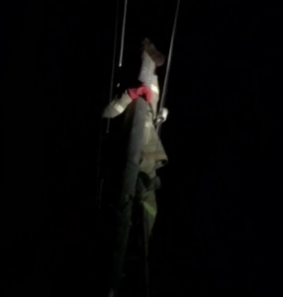 В регионе провели операцию по спасению кота с верхушки столба электропередач (+ФОТО)