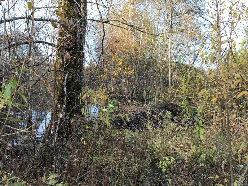 В Кировской области обнаружено крупное сооружение, созданное животными