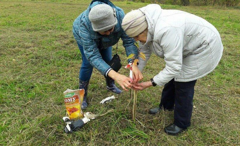 В Кирове посадили кедры