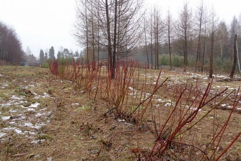dendrapark В дендропарке высажены 12 видов редких пород деревьев и кустарников