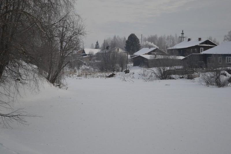 Лось, не побоявшийся людей, всполошил целый поселок (+ФОТО)