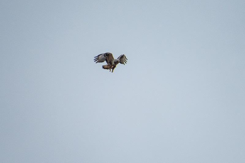 В Кировской области замечена интересная птица