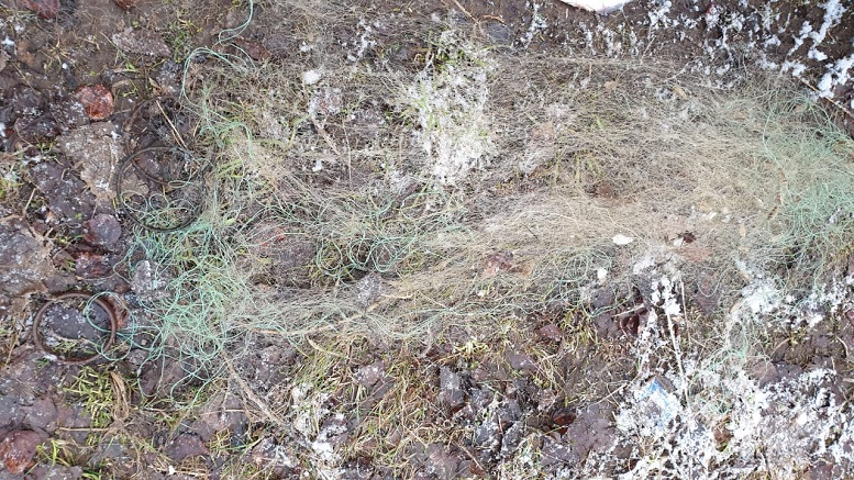 В Кирове на двух браконьеров заведены уголовные дела
