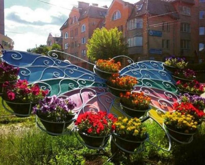 tsvetnik babochka На кировских клумбах высадят более 150 тысяч цветов