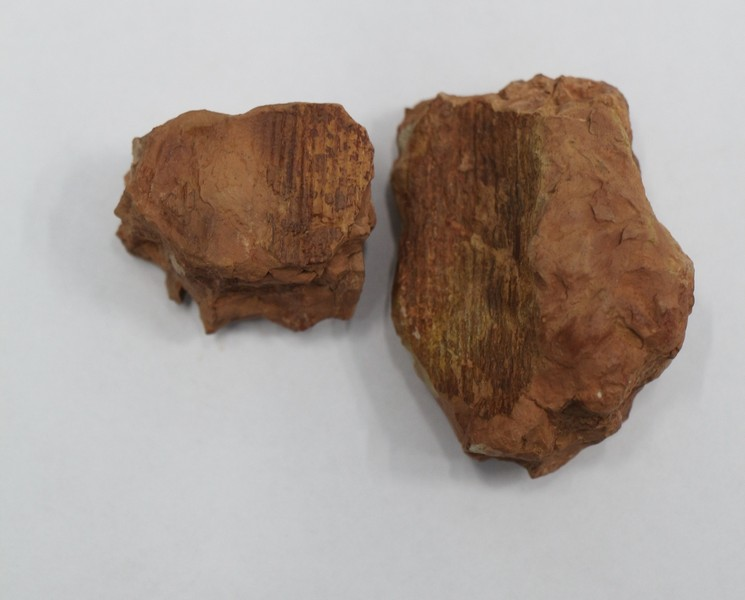 Кировские палеонтологи сообщают о первых в этом году находках