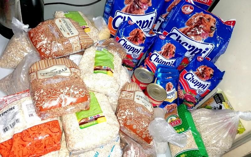 pomosch zhivotnym В Кирове завершилась акция помощи приютам для бездомных животных