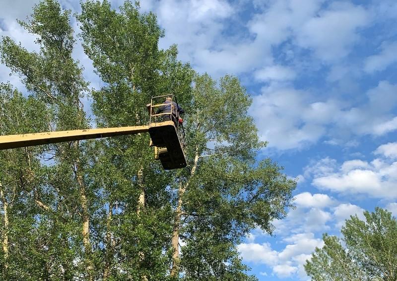 spasenie kota 1 В Кировской области с помощью спецтехники спасли кота