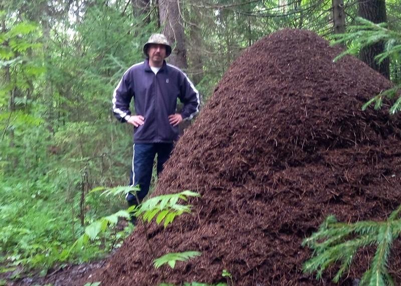 Кировчанин наткнулся на гигантские муравейники (+ФОТО)