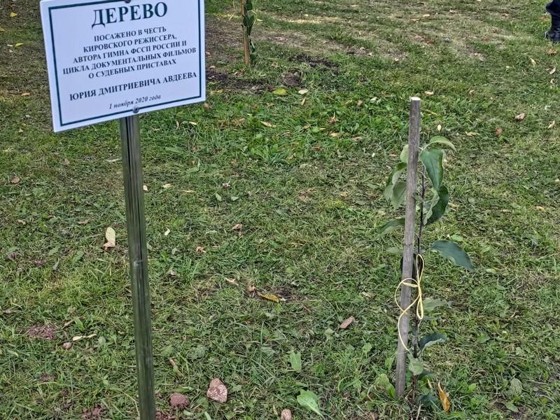 В Александровском саду заложена новая аллея