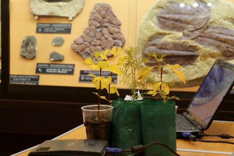Кировчане подарили музею редкие растения