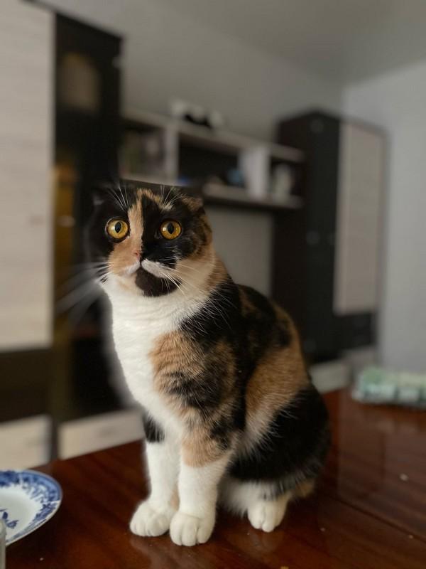 У кировчан из окна выпала кошка запоминающегося окраса