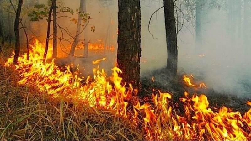 lesnoy pozhar МЧС и Лесоохрана отчитались о пожарах в Кировской области