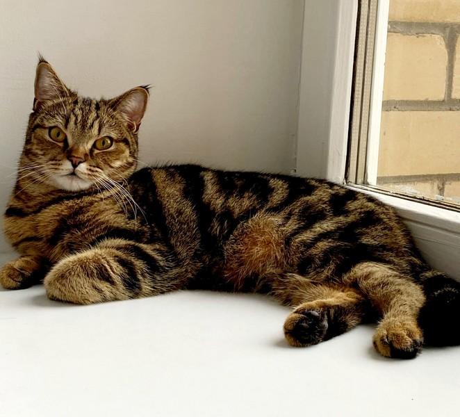 koshka 20 тысяч рублей за найденного кота