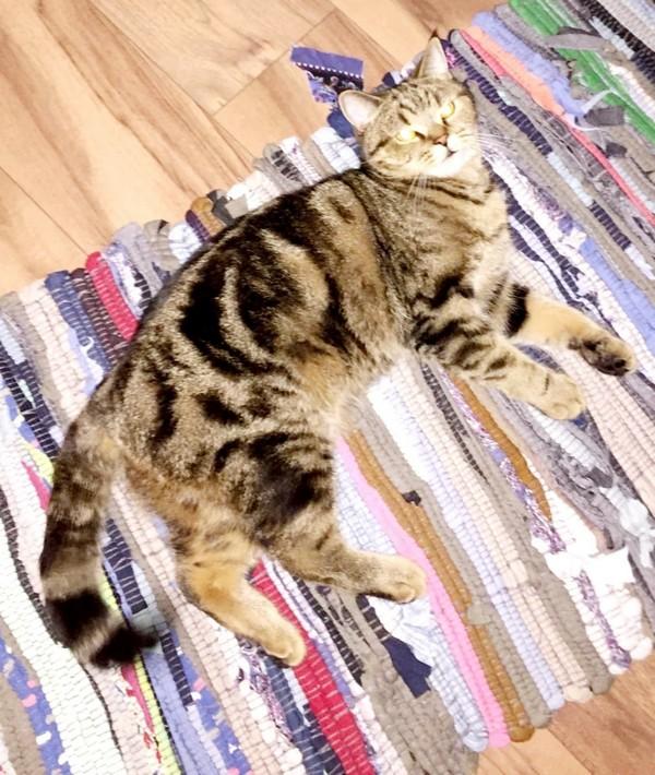 20 тысяч рублей за найденного кота